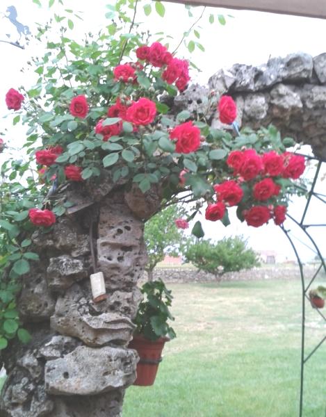 Imagen de un arco de piedra conflores